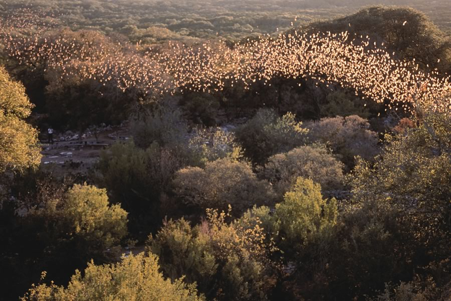 Bracken Bat Cave in Comal County, between Bulverde and Garden Ridge, Texas