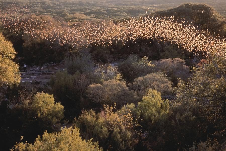 Bracken Bat Cave in Comal County, between Bulverde and Garden Ridge, Texas